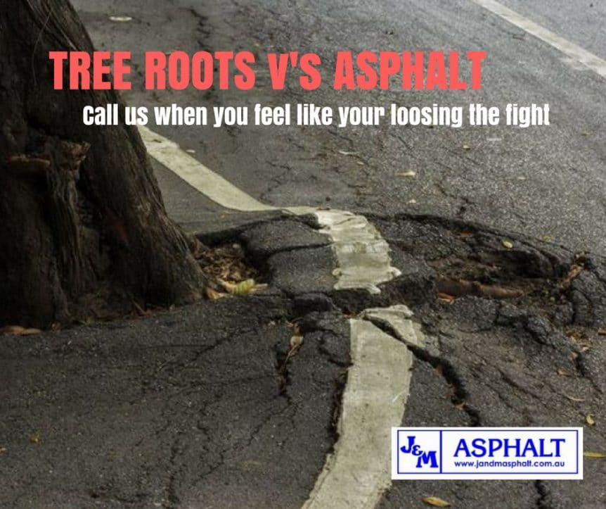 Tree root damage to asphalt